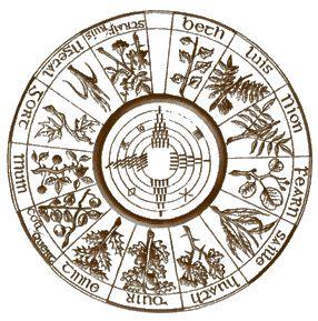 cedro-oroscopo-celtico